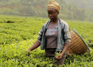 Té de Ruanda